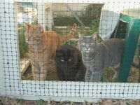 Three cats in pen