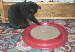 Jolie playing with Turbo Scratcher