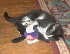 Kitten grabbing stuffed toy
