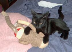 Sparky grabbing stuffed monkey