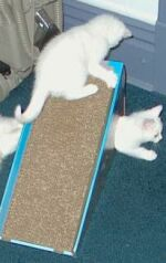 Kittens playing on and in the Cosmic Alpine Scratcher