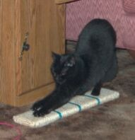 Snookums scratching on flat sisal scratcher