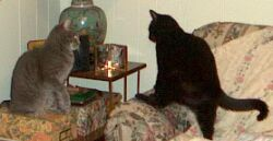 integrating cats supervised visits to free mingling